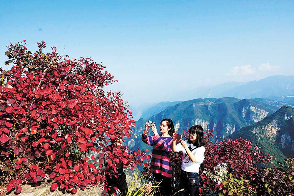 Visitors take pictures of the red leaves in Wushan Three Gorges, photo by Wang Zhonghu